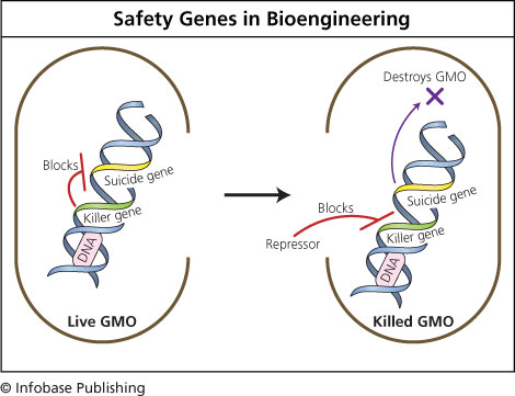 """potential benefits and costs of genetically Potential hidden costs of gm crops some people worry that genetically-modified foods will negatlively affect ecosystems opponents of genetically modified foods argue that it is impossible to predict exactly how the new crops—sometimes called """"frankenfoods""""—will affect ecosystems."""